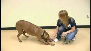 Dog Tricks : Bowing Dog Trick
