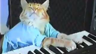 Charlie Schmidt's Keyboard Cat! - THE ORIGINAL! 5534755 fuarena