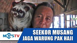 Download Video SEEKOR MUSANG JAGA WARUNG MAKAN MP3 3GP MP4