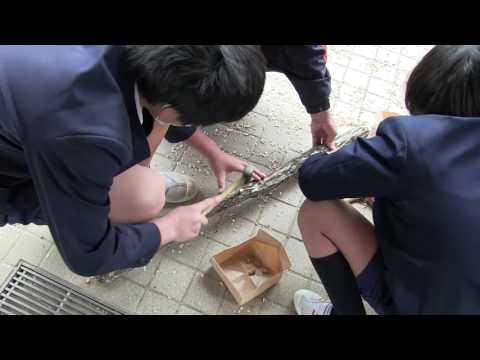 種子島の学校活動:納官小学校林業教室しいたけ育成体験
