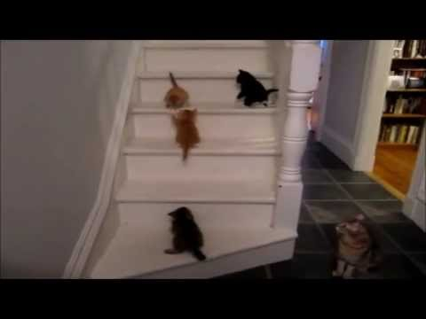 cats falling down stairs