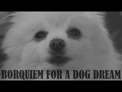Собака Гейб - Бореквием по сну собаки