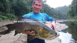 Part 2 sees us trek deep into the jungle resulting in a world record spot tail bass. Massive thanks to our guide James for putting us...