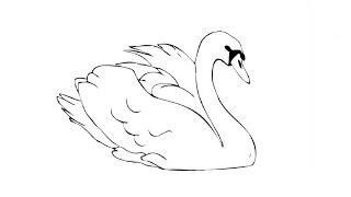 Видео: как нарисовать лебедя