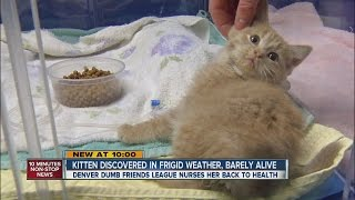 This Sweet Little Kitten Was Saved After Almost Freezing To Death