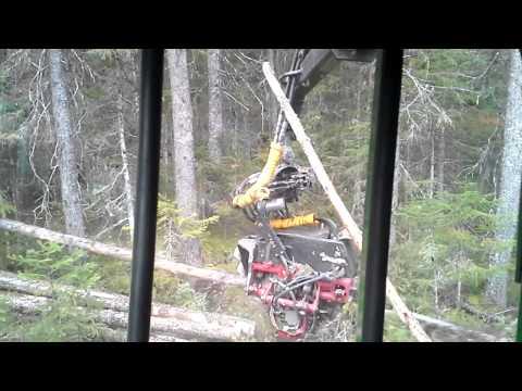 Waratah 414 multi SR (видео)