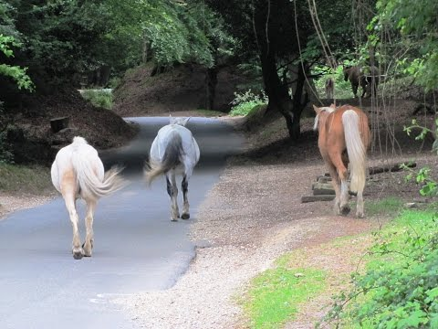 New Forest Country Walk   Fordingbridge   Woodgreen   Hale   Godshill round | the new forest  Walks