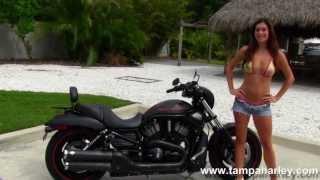2. Used 2011 Harley-Davidson VRSCDX Night Rod Special for Sale
