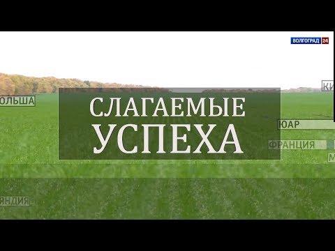 Уборка подсолнечника в Волгоградской области. Выпуск от 14.10.2019