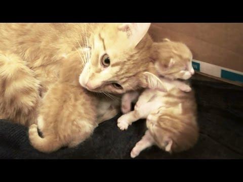 Kissaemo juttelee suloisesti pennuilleen – Kuuntele!