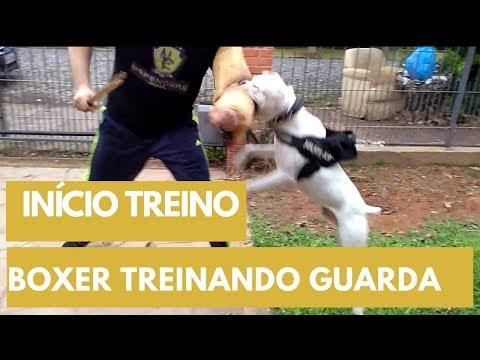 Video BOXER TREINANDO PARA GUARDA! Um grande boxeador, sem dúvida! download in MP3, 3GP, MP4, WEBM, AVI, FLV January 2017
