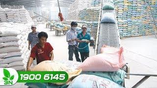 Xuất khẩu gạo 8 tháng đầu năm 2018 – bước tăng trưởng ấn tượng