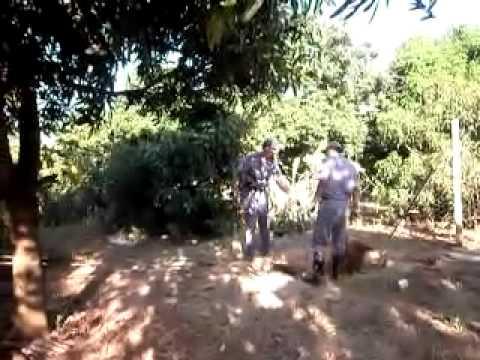 Cavalo cai em buraco em Ipiguá