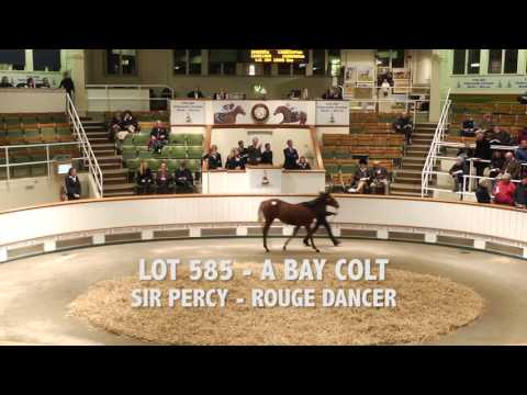 Tattersalls December Foal Sale 2015 Day 2 Video Review