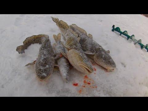 Ловля налима. Схватила щука. Рыбалка в декабре 2017. Очередная проверка поставух