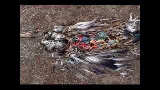 Plastic Soup - World Oceans Day & Biodiversity 2015