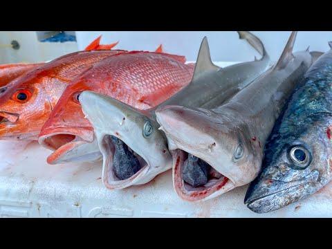 Shark, Snapper, Kingfish! Catch Clean Cook (Deep Sea Fishing)