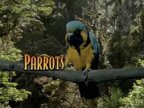 Barevný svět papoušků
