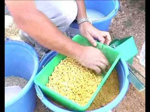 Como encolar Maiz para la pesca