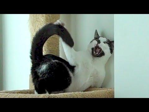 flea medicine safe for cats