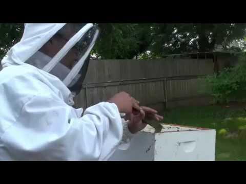The Buzz on Backyard Beekeeping
