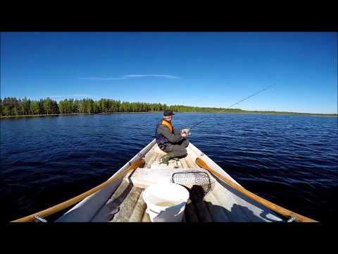 Jättihauen kalastusta  – Tämä haavimies ansaitsee mitalin!