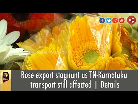 Rose-export-stagnant-as-TN-Karnataka-transport-still-affected-Details
