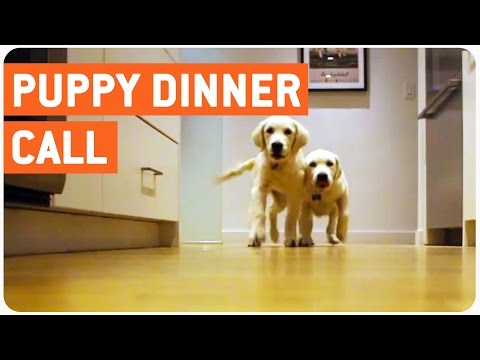 puppies running for dinner, timelapse style!