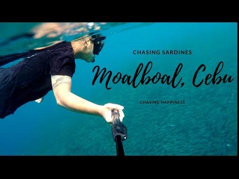 Moalboal, Cebu | Sardines Run