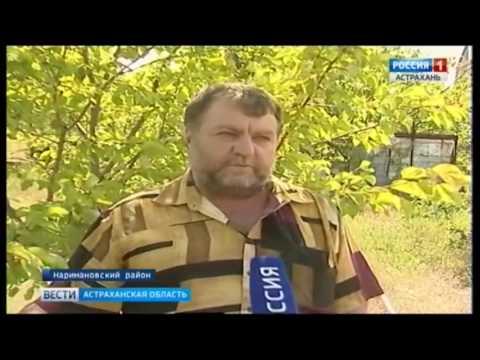 Об установке феромонных ловушек в Астрахани на наличие насекомых-вредителей