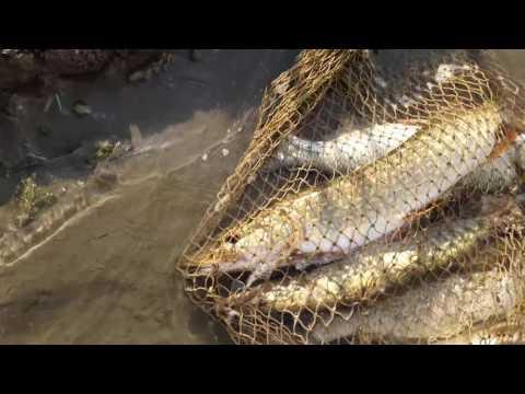 когда сезон рыбалки в узбекистане