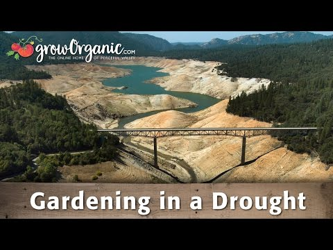 Gardening in a Drought