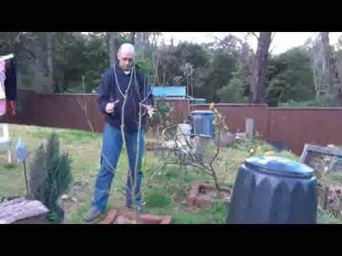 Pruning Apple Trees.