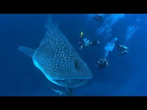 Shark Biology | JONATHAN BIRD'S BLUE WORLD