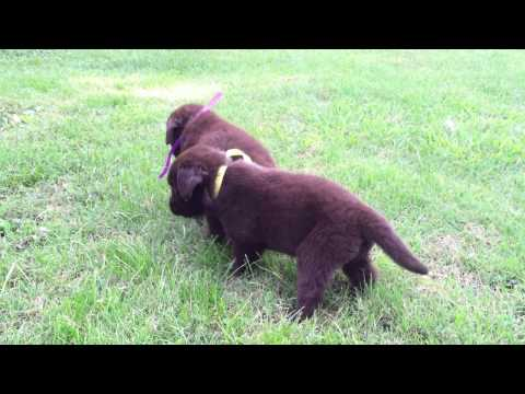 Video of Lacies girls playing in the yard