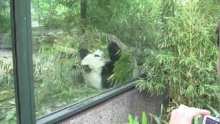zoo berlin Zoologischer Garten Berlin / The Berlin Zoological Garden - 3rd July, 2012 (1080 HD)