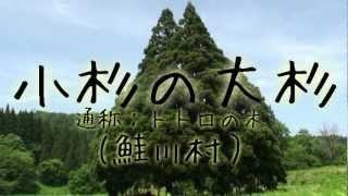 【山形】あのトトロの形をした木が実在した!?