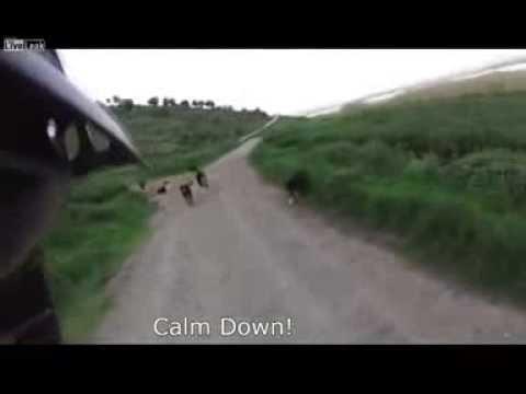 『氣勢』很重要,看看這個車手被 25隻狗包圍攻擊時是怎麼做的!
