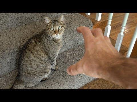 come-non-fare-una-grattatina-sulla-pancia-al-gatto