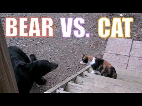 當野熊遇到家貓%252E%252E牠兇狠的爪子一揮!
