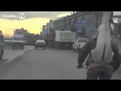 uomo porta capra a spasso...in bicicletta!