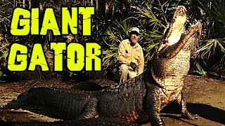 1200 LB Alligators that can eat you WHOLE