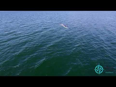 Présentation de Mer et monde Écotours
