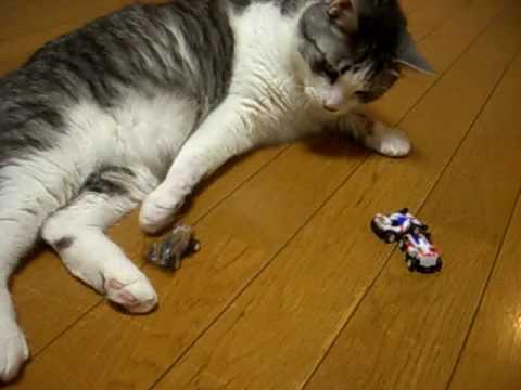 「[ネコ]『チョロQ発進!』チョロQを巧みに操るお爺さん猫。」のイメージ