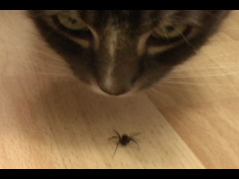 2 cats, 1 spider