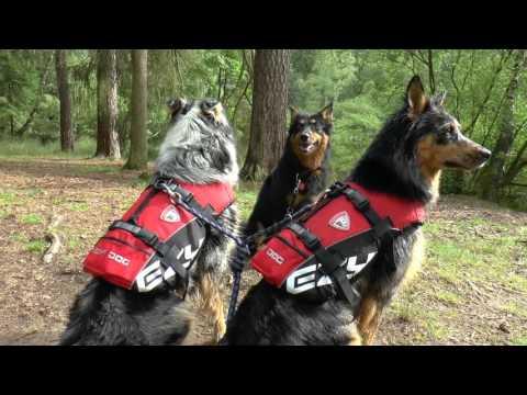 Schweden-Feeling beim Dog-Schwimmwesten-Test im Spessart