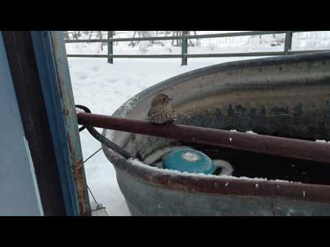 A Kind Man Uses His Warm Breath To Free a Bird Who Was Frozen Onto a Steel