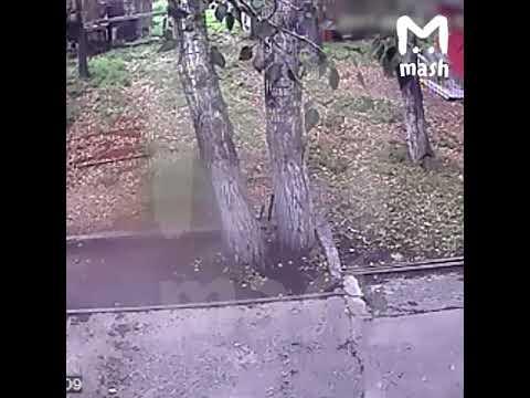 Пьяный житель Иркутска залез в клетку к трем медведям, чтобы покормить их сгущеночкой