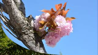 Disfruta de la primavera en Astillero
