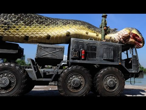 la grandezza di questo serpente vi farà sgranare gli occhi!